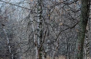01 Казалось бы, поздняя осень – не самое живописное время года. Холод, сырость и серость не на шутку пытаются скрыть красоту и заставить нашего брата - фотографа остаться дома. Но красота не умирает, как и желание прикоснуться к ней... ;)