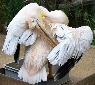 Птица-акробат :)