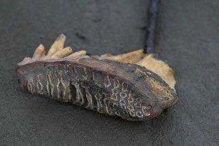зуб мамонта, за него можно выручить у скупщика до 500руб, его почти не собирают