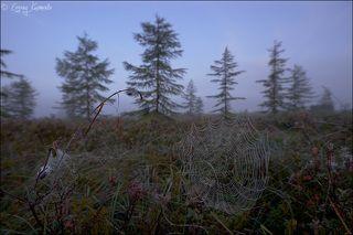 Пейзаж с паутинкой на переднем плане