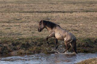 Лошади легко преодолевают водные преграды