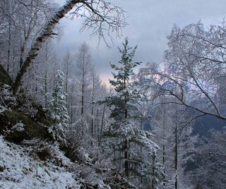 Алтайский этюд
