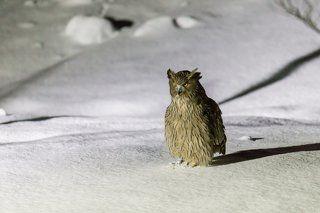 После он садится на снег недалеко от лунки и снова осматривается.