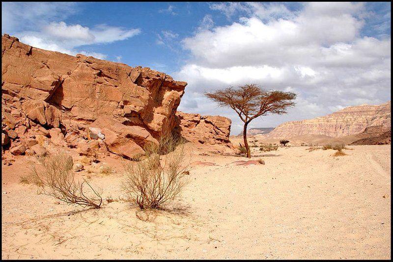 Египет Каменистая пустыняphoto preview