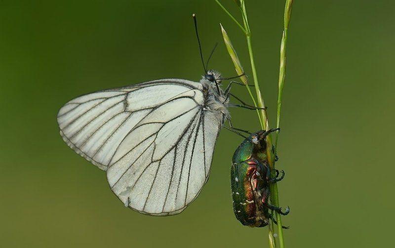 Бабочка Варвара вытирает белым платочком слезинку у жука Никодимаphoto preview