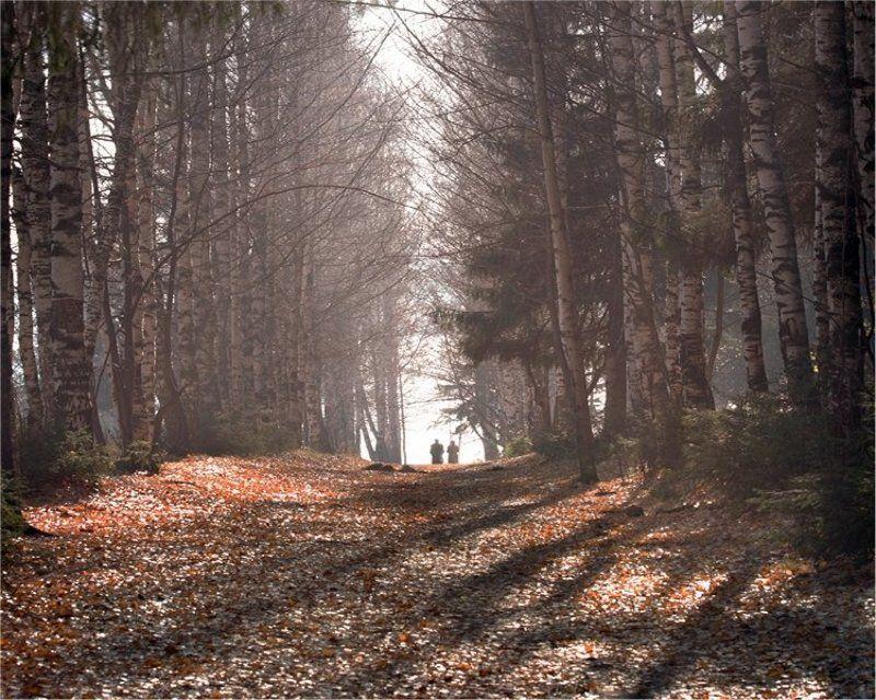 ..осень жизни...photo preview