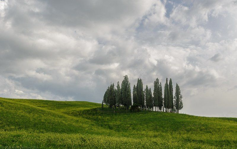 Iconic cypresses of Tuscanyphoto preview