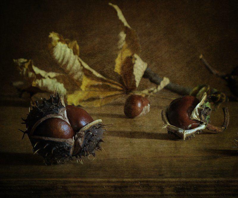 Каштан, Натюрморт, Осень Немного эротики... )photo preview