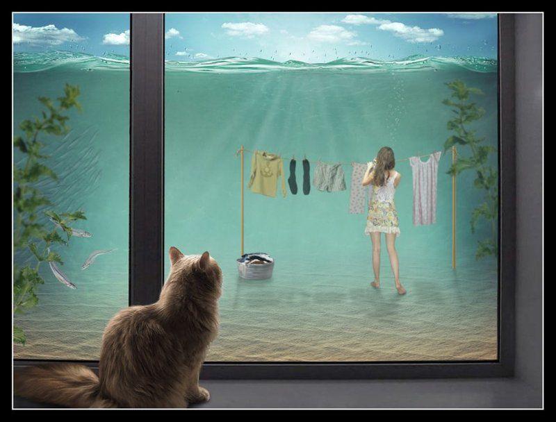 Кошка юмор, Окно, Стирка Дождь шёл долго... но уже распогодилось...photo preview