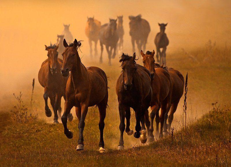 кони,лошади,табун Год лошади!...Пора ехать.photo preview