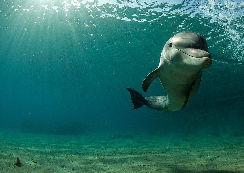Танцы дельфиновphoto preview