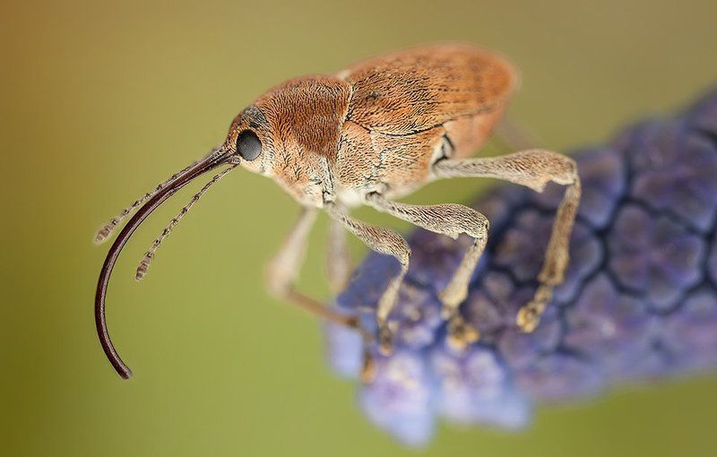 Weevilphoto preview