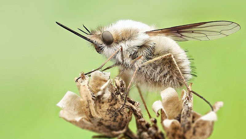 Bee flyphoto preview