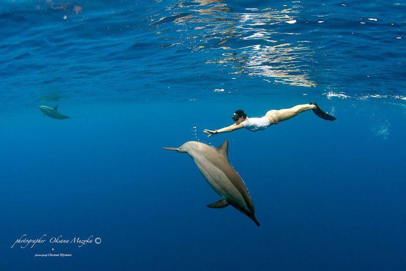 Вода, Дайвинг, Дельфин, Красное море, Русалка Дельфины и русалкаphoto preview