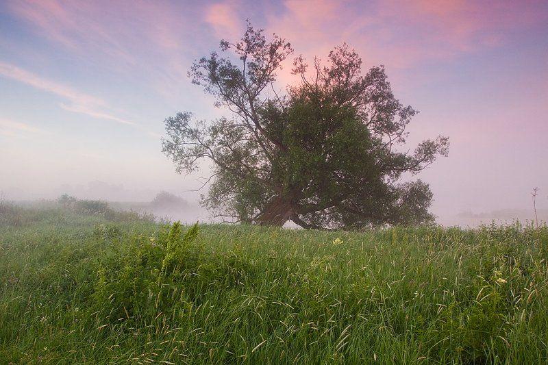 2014, Берег, Дерево, Июнь, Лето, Облака, Река, Трава, Туман, Утро photo preview