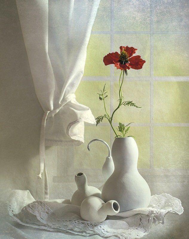 Маки, Настроение, Цветы Аленькие....photo preview