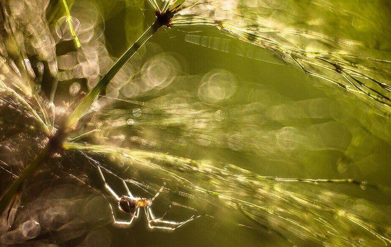 паук, блики про паучка в солнечный вечерphoto preview