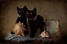 Скрапбукинговские котята :)