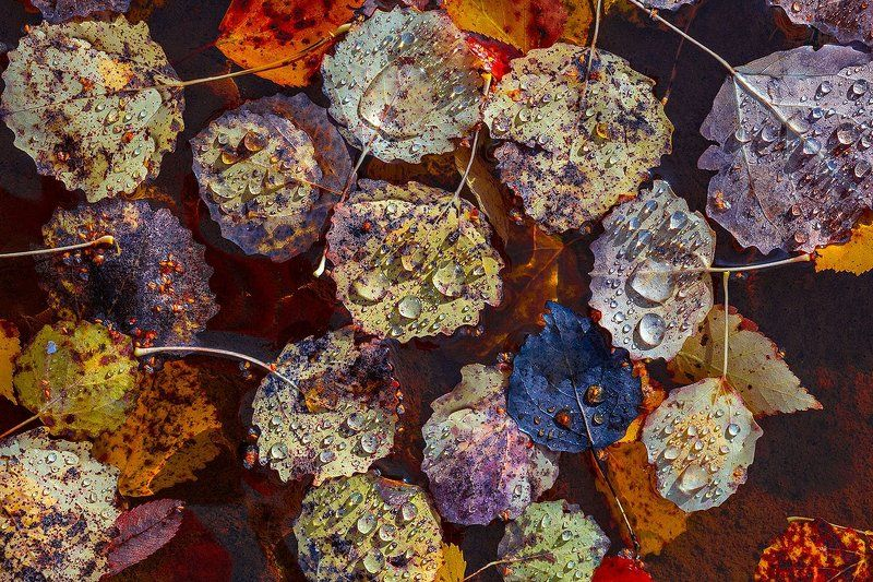 Осенняя распродажа драгоценностейphoto preview