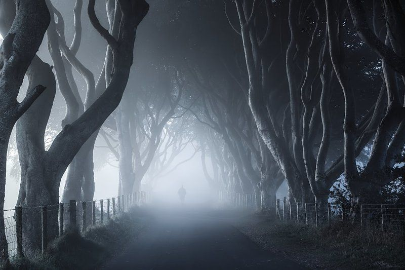 Dark Hedges, Fog, Ireland, Man, Mist, Morning, Northern ireland, Road, Trees The Dark Hedgesphoto preview
