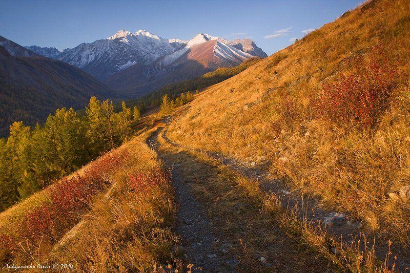 2014, Алтай, Горы, Дорога, Лиственницы, Маашей, Осень, Россия, Снег, Трава ***photo preview