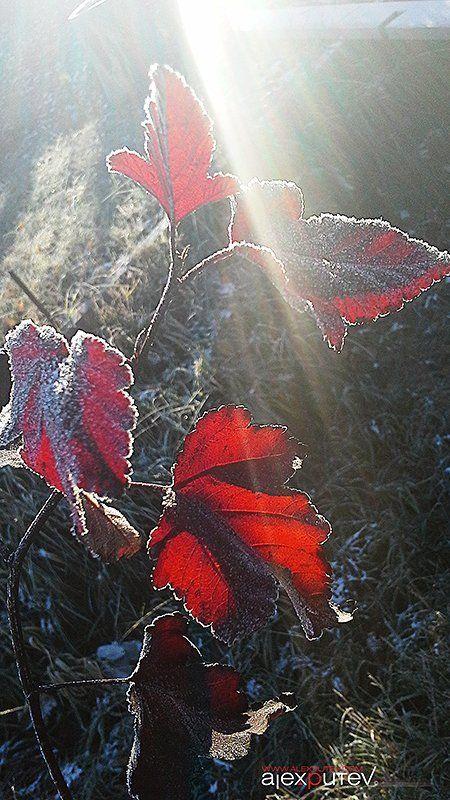 Заморозки, Иней, Октябрь, Рассвет на рассветеphoto preview