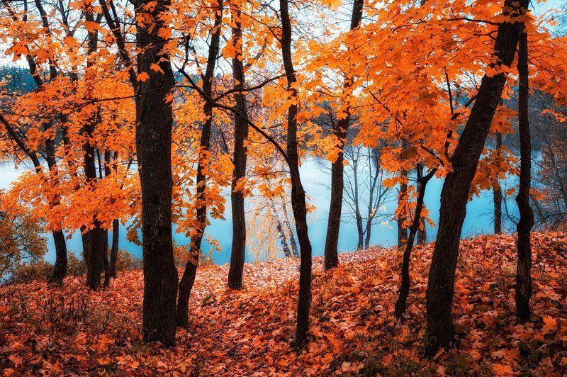 Осенний вальс прощальныйphoto preview