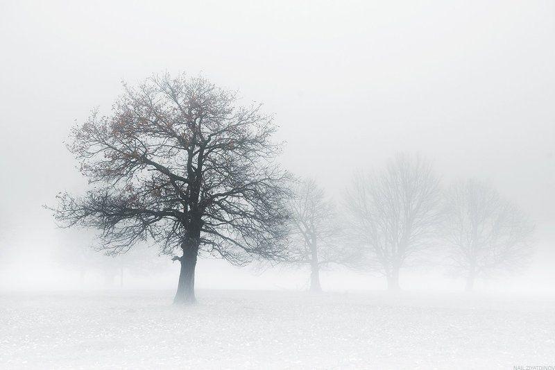 В плену белого туманаphoto preview