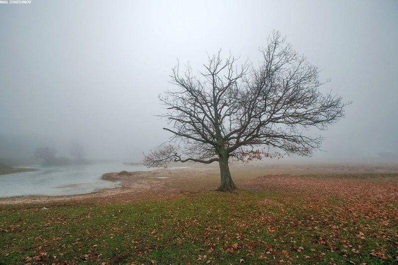 Заколдованный туманphoto preview