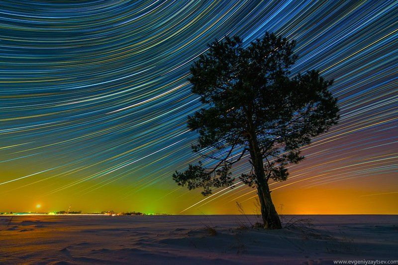 long exposure, night, pine, snow, stars, startrails Frosty Nightphoto preview