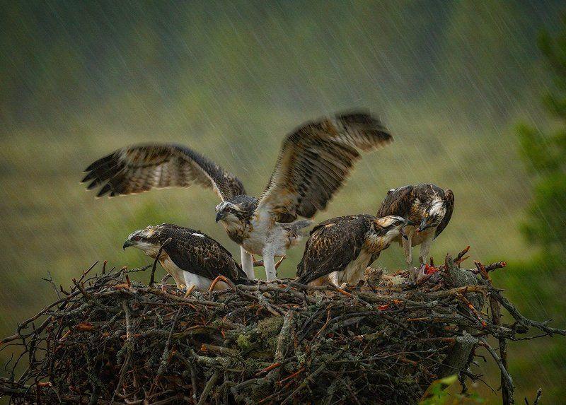 в дождливый деньphoto preview