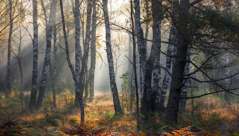 Осенним лесом надышатьсяphoto preview