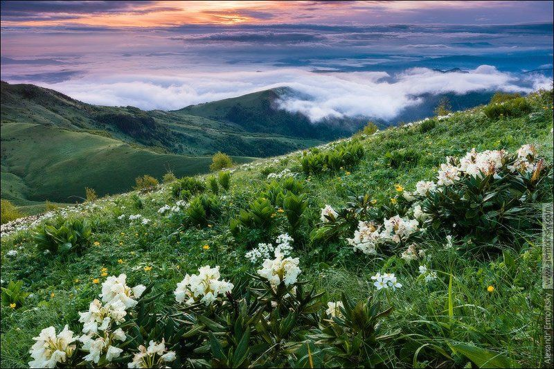 Caucasus, Thachi, Кавказ, Тхачи ~ Весна идёт ~photo preview