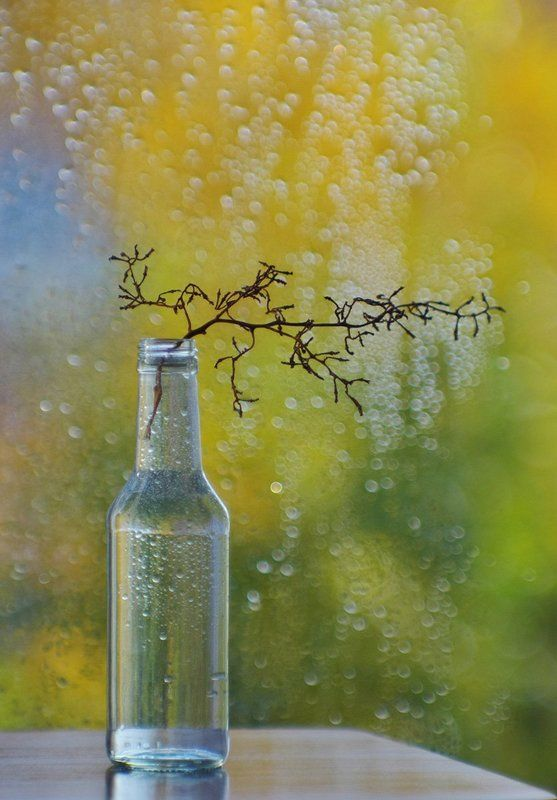 Просто дождь осенний за окномphoto preview