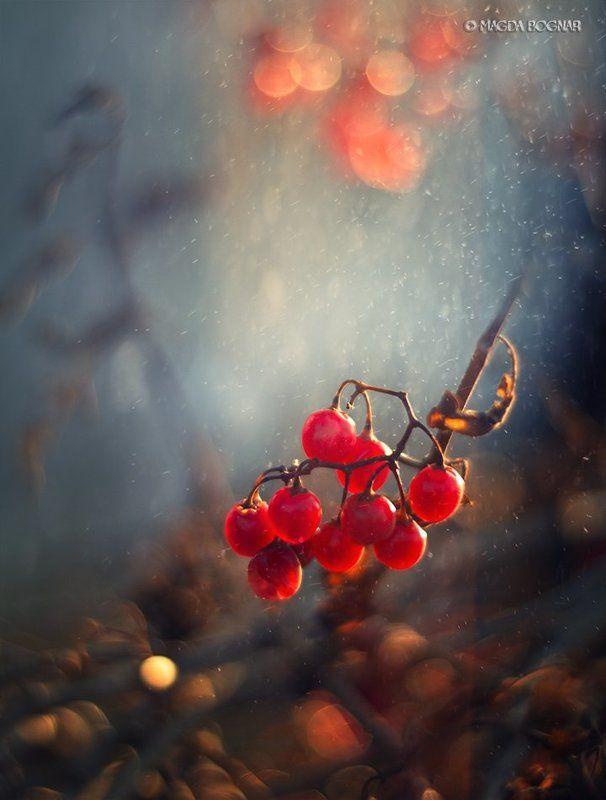 Winter Berriesphoto preview