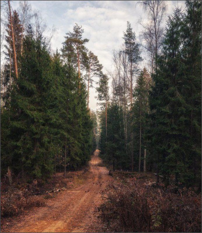 Лес, Осень, Подмосковье По осенним дорожкамphoto preview