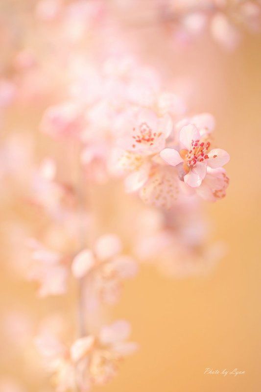 flowers in Springphoto preview