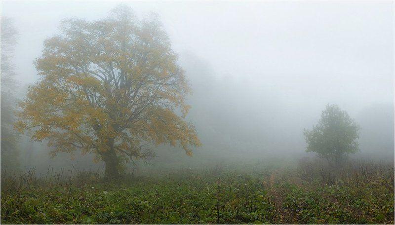 Осень ***photo preview