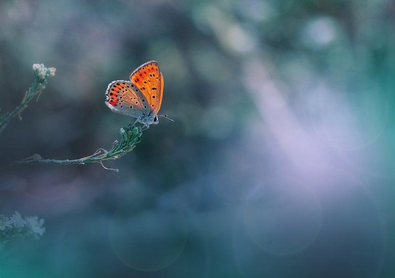 Butterfly, Close-up, Colors, Green, Light, Macro, Nature, Nikon ~~*~~photo preview