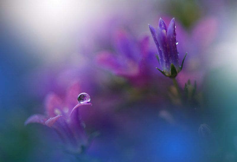 Close-up, Drop, Flower, Macro, Nikon ``*``*``photo preview