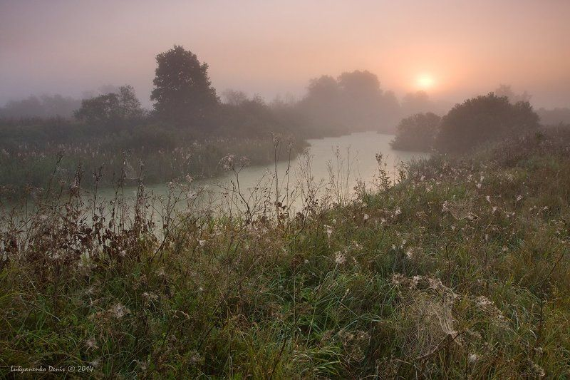 2014, Деревья, Жуков, Огубь, Осень, Паутина, Пейзаж, Река, Солнце, Трава, Туман, Утро ***photo preview