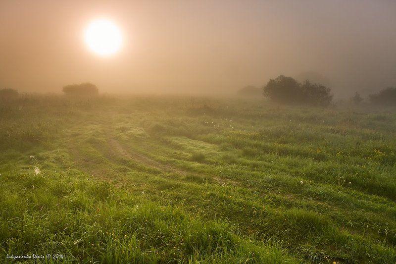 Весна, Дорога, Кусты, Луг, Паутина, Пейзаж, Солнце, Трава, Туман, Утро, Цветы Другой мирphoto preview
