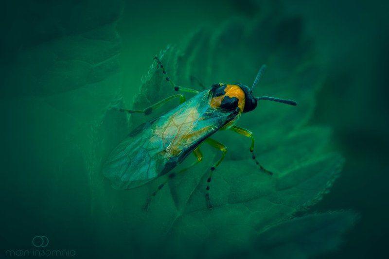 moon-insomnia, оса, земляная оса, природа, насекомые ***photo preview