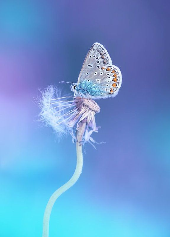 Бабочкиphoto preview