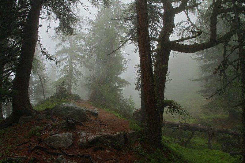 лес, Швейцария, Алечский, туман ***photo preview