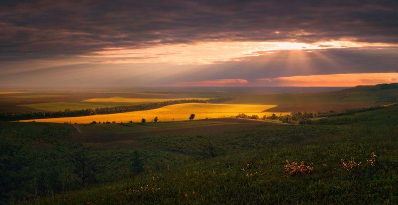 весна, вечер, май, поле, рапс, свет И разверзлись небесаphoto preview