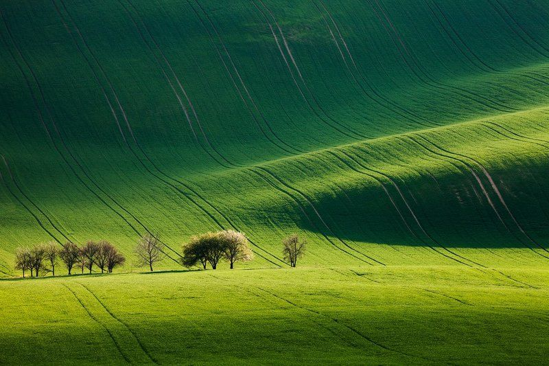 Czech republic, Fields, Green, Light, South moravia, Spring, Trees, Waves Stripe of Lightphoto preview