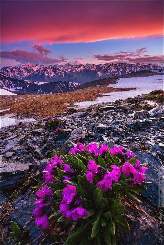 Алтай, Altai ~ Чёрное сердце ~photo preview