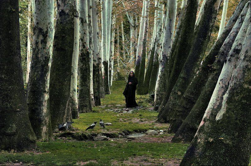 иран, тегеран Song of forestphoto preview