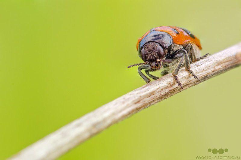 жук, капли, макро, насекомые, роса, утро Утроphoto preview
